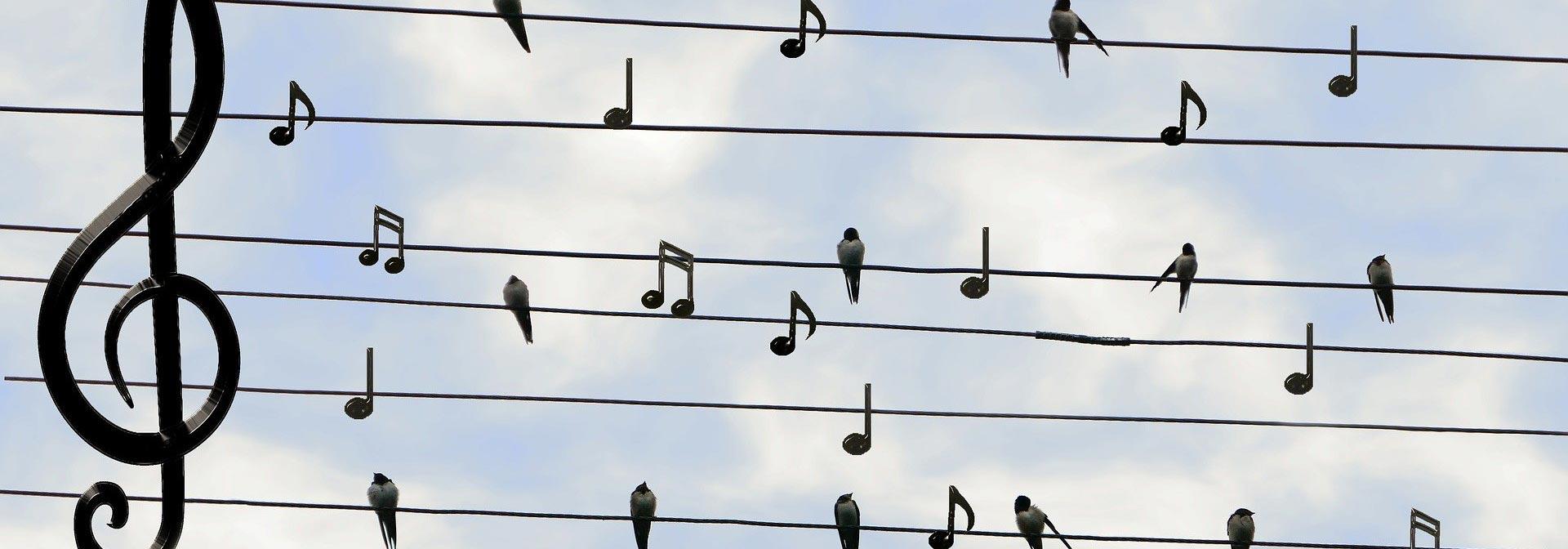 Vogel Noten