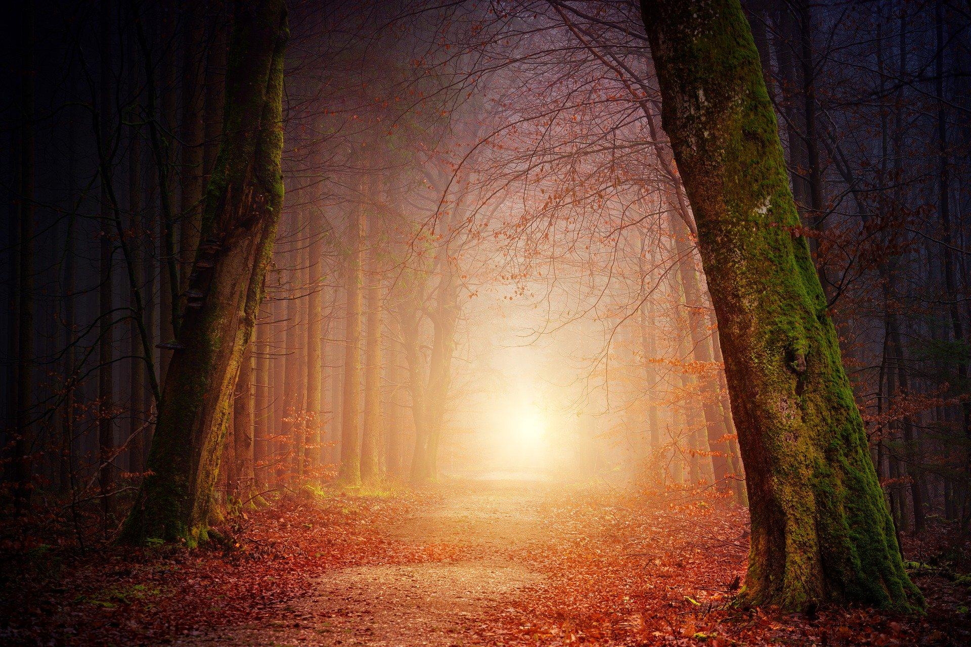 Bunt sind schon die Wälder 1